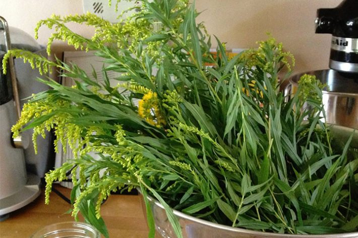 8 Herbs for Allergy Relief: Goldenrod